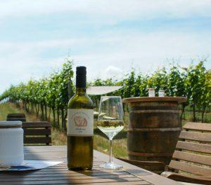 Verkostung im Weingarten